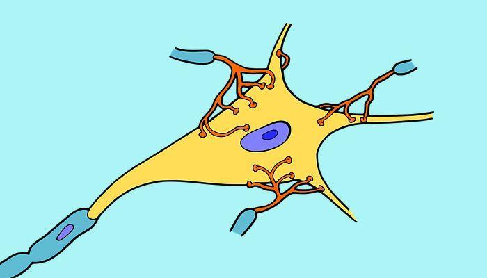 células madre para la esclerosis lateral amiotrófica
